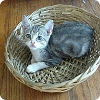 Adopt A Pet :: Dooby - Texarkana, AR