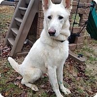 Adopt A Pet :: Apollo - Louisville, KY