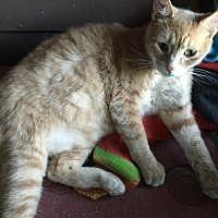Adopt A Pet :: Gabe - Sedalia, MO