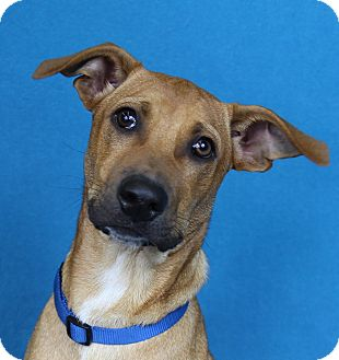 Shepherd (Unknown Type) Mix Dog for adoption in Minneapolis, Minnesota - Sebastian