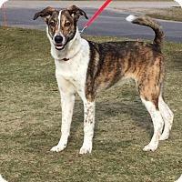 Adopt A Pet :: OSCAR - Traverse City, MI