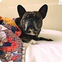 Adopt A Pet :: Boris - Columbus, OH