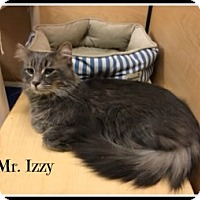 Adopt A Pet :: Izzy - Spring Brook, NY