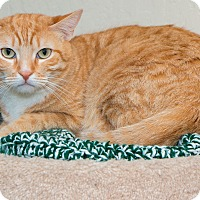 Adopt A Pet :: Ted - Fountain Hills, AZ