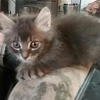 Adopt A Pet :: River - Morgan Hill, CA