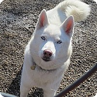 Adopt A Pet :: Keeda - Geneseo, IL