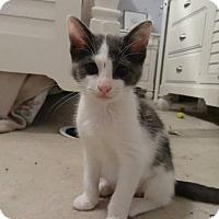 Adopt A Pet :: Charlotte - Colmar, PA