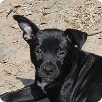 Adopt A Pet :: Bruce - Marion, AR