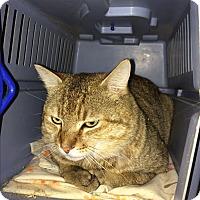 Adopt A Pet :: Max - Clay, NY