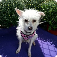 Terrier (Unknown Type, Small) Mix Dog for adoption in Detroit, Michigan - Frita