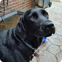 Adopt A Pet :: Titus - Coppell, TX