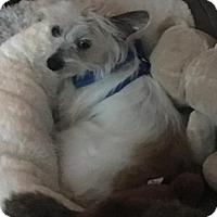 Adopt A Pet :: Allston - Dallas, TX