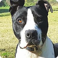 Adopt A Pet :: Pinnacle Petey - Little Rock, AR