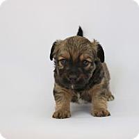 Adopt A Pet :: Kale - Yucaipa, CA