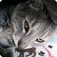 Adopt A Pet :: Marble - San Ramon, CA