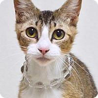 Adopt A Pet :: Betty - Dublin, CA