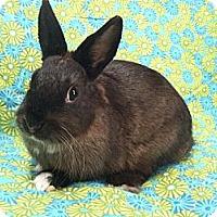 Adopt A Pet :: Cartier - Williston, FL