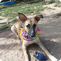 Adopt A Pet :: Sonya - Denver, CO