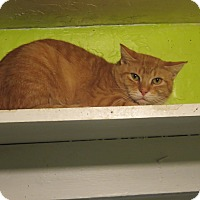 Adopt A Pet :: Keegan - Coos Bay, OR