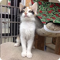 Adopt A Pet :: Minuette - Warren, OH