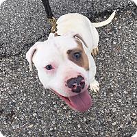 Adopt A Pet :: SCARLETT - Bedford, KY