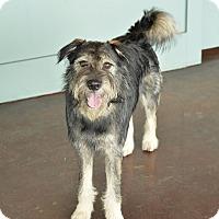 Adopt A Pet :: Eric - San Antonio, TX