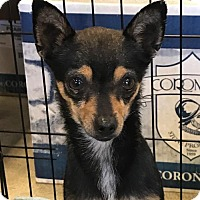 Adopt A Pet :: Queenie - Chico, CA
