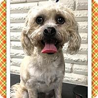 Adopt A Pet :: Baxter - SE TX - Tulsa, OK