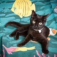 Adopt A Pet :: Belle - Elizabethtown, PA