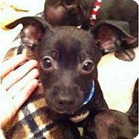 Adopt A Pet :: Rascal - Lake Forest, CA