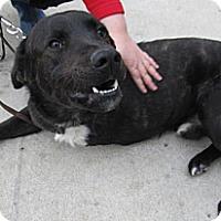 Adopt A Pet :: McCoy (URGENT!) - Chicago, IL
