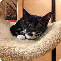 Adopt A Pet :: Tucker - Monroe, GA