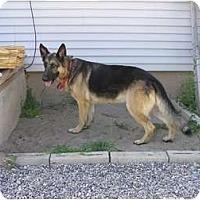 Adopt A Pet :: Mr. Charles - Hamilton, MT