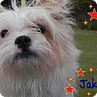 Adopt A Pet :: Jake - Surrey, BC