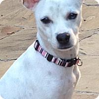 Adopt A Pet :: Emmy - Dallas, TX