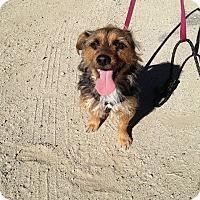 Adopt A Pet :: Piper - Santa Monica, CA