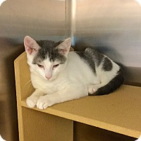 Adopt A Pet :: Galloway - Colmar, PA