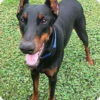 Adopt A Pet :: Ramsey - Arlington, VA