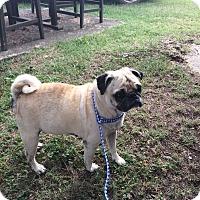 Adopt A Pet :: Aunt Mabel - Tontitown, AR