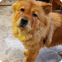 Adopt A Pet :: Goldie - Fennville, MI