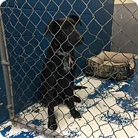 Adopt A Pet :: Lorna - Newburgh, IN