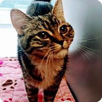 Adopt A Pet :: Ladybug - Woodside, NY