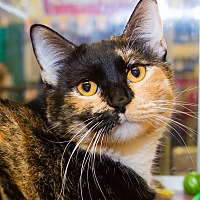 Adopt A Pet :: Cecilia - Irvine, CA