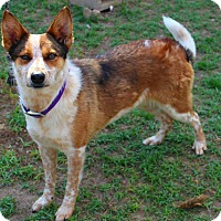 Adopt A Pet :: Socksie - Shreveport, LA