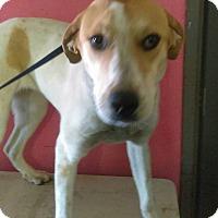 Adopt A Pet :: Ariel - Jackson, TN