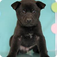 Adopt A Pet :: Dead Pool - Waldorf, MD