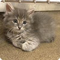 Adopt A Pet :: Rip Tide - Anaheim Hills, CA