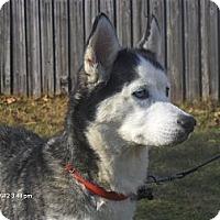 Adopt A Pet :: Star - Jacksonville, FL