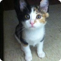Adopt A Pet :: Ladybug - Trevose, PA