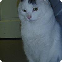 Adopt A Pet :: Leo Valvo - Hamburg, NY